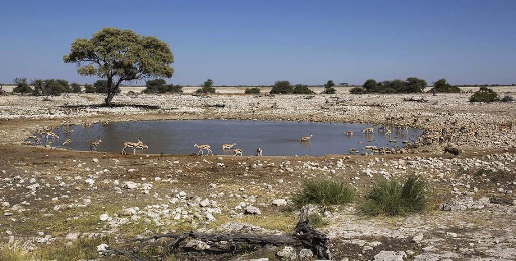 Etosha Nationaal Park