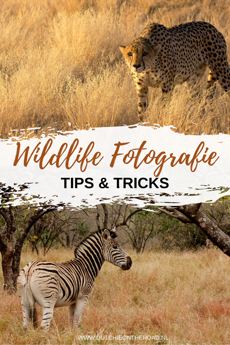 wildlifefotografie