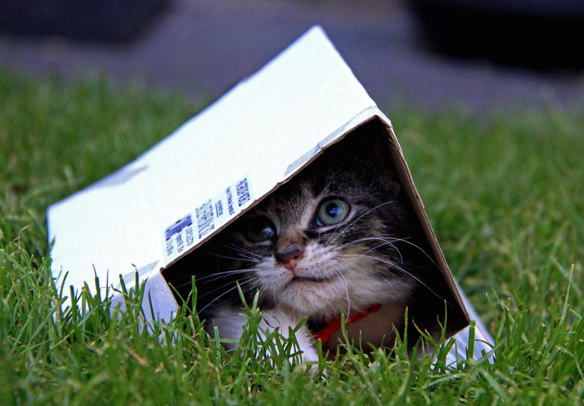 werelddierendag een ode aan mijn katten