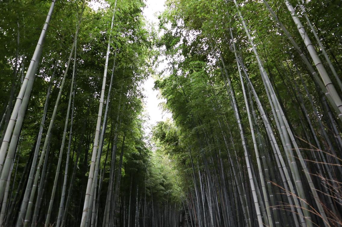 bamboebos Kyoto