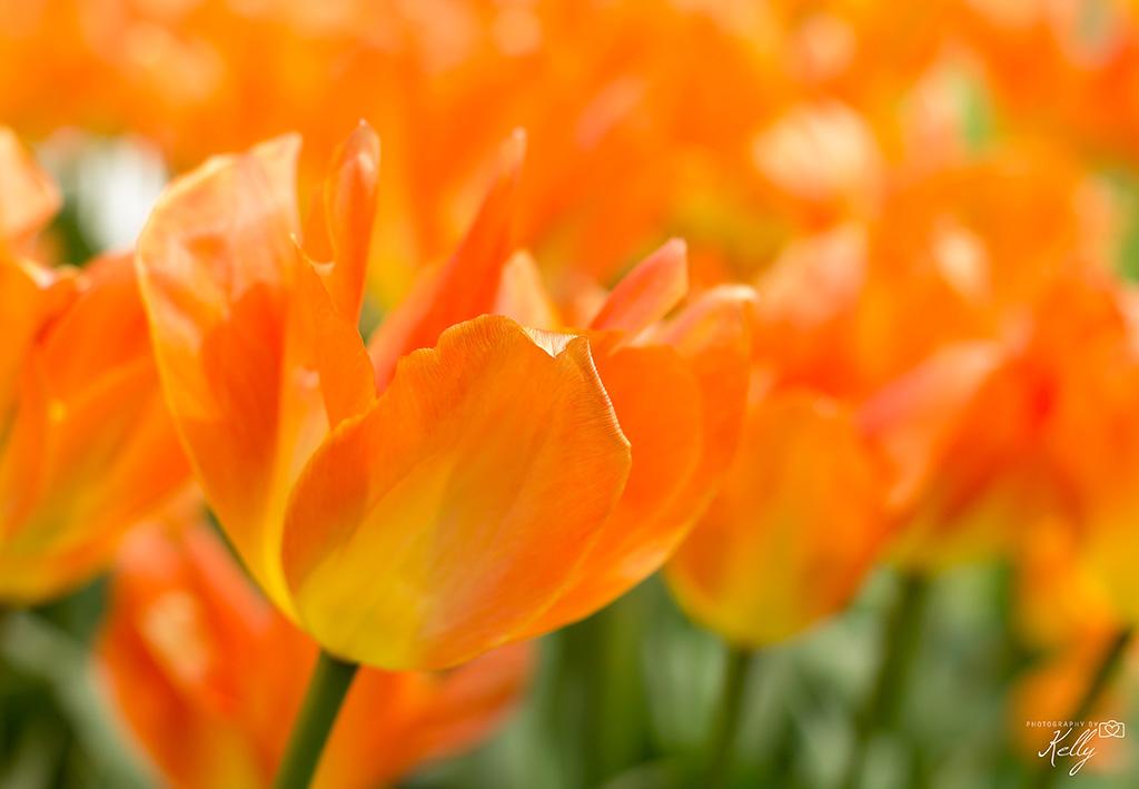 12x oranje boven