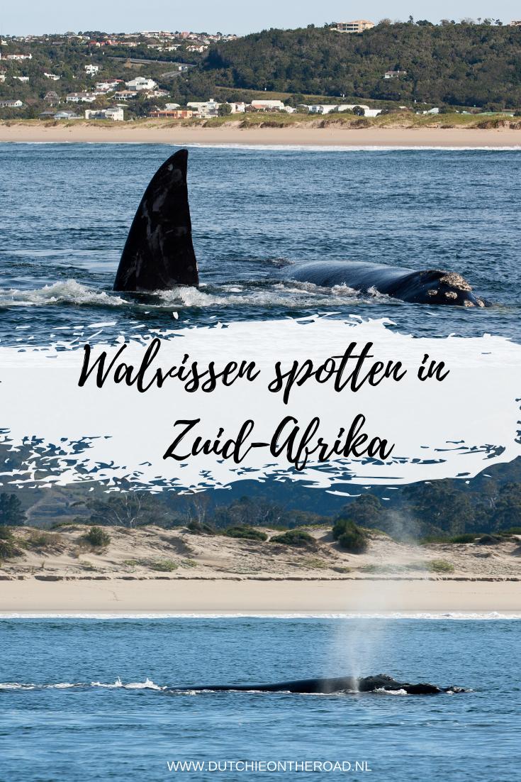 walvissen spotten in zuid-afrika