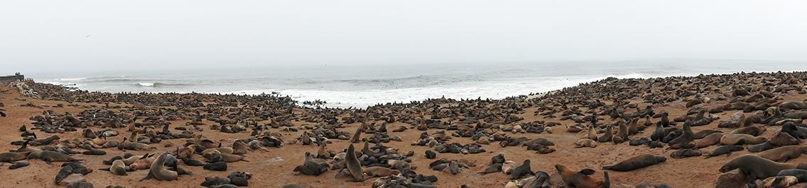 Cape Cross Namibië