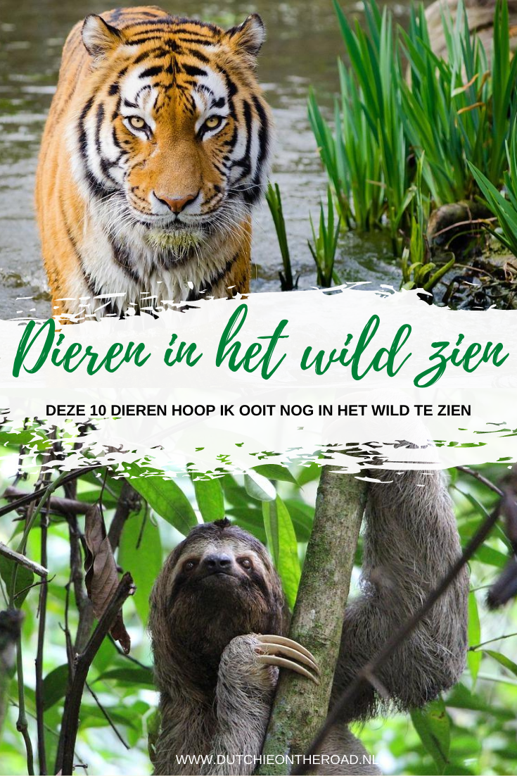 dieren in het wild zien