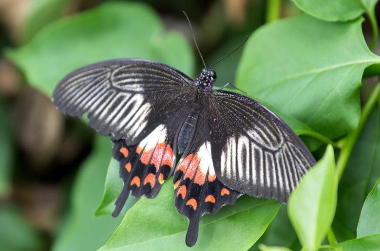 tropische vlindertuin