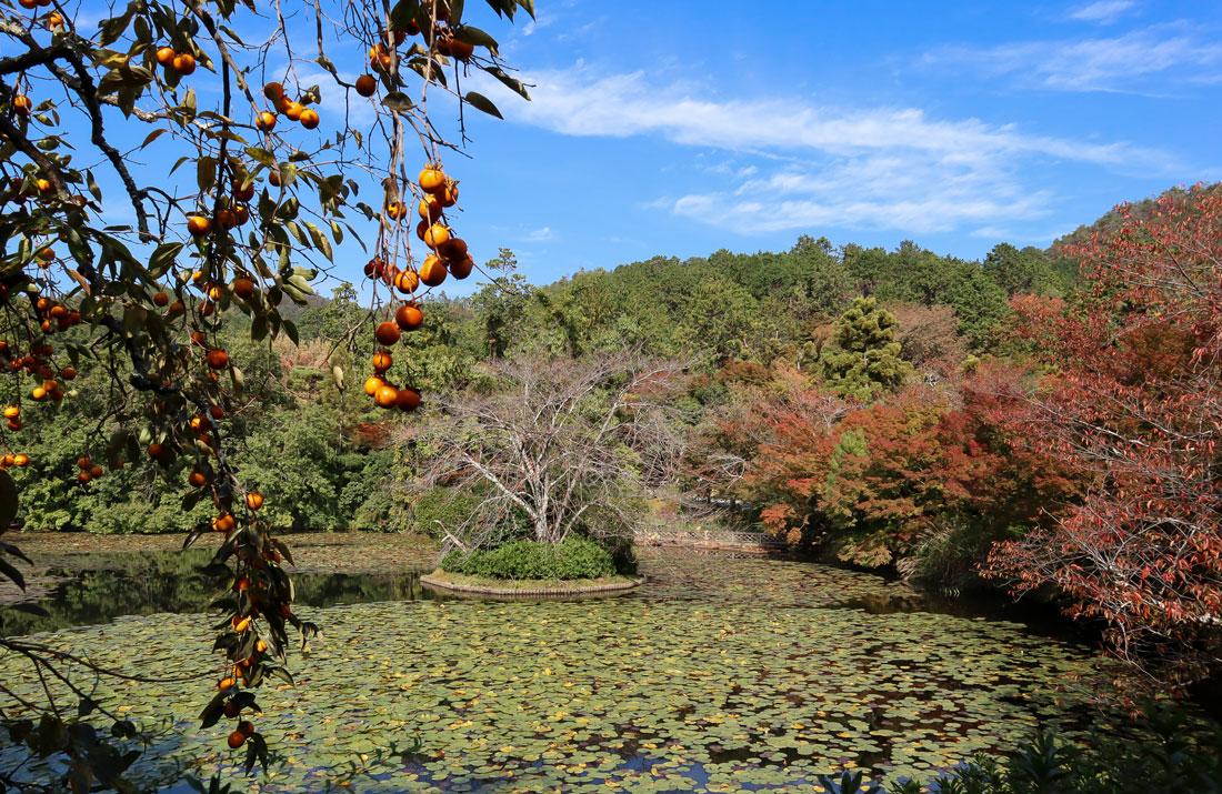 Herfst in Japan
