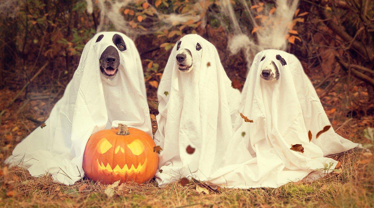 Halloween activiteiten voor thuis