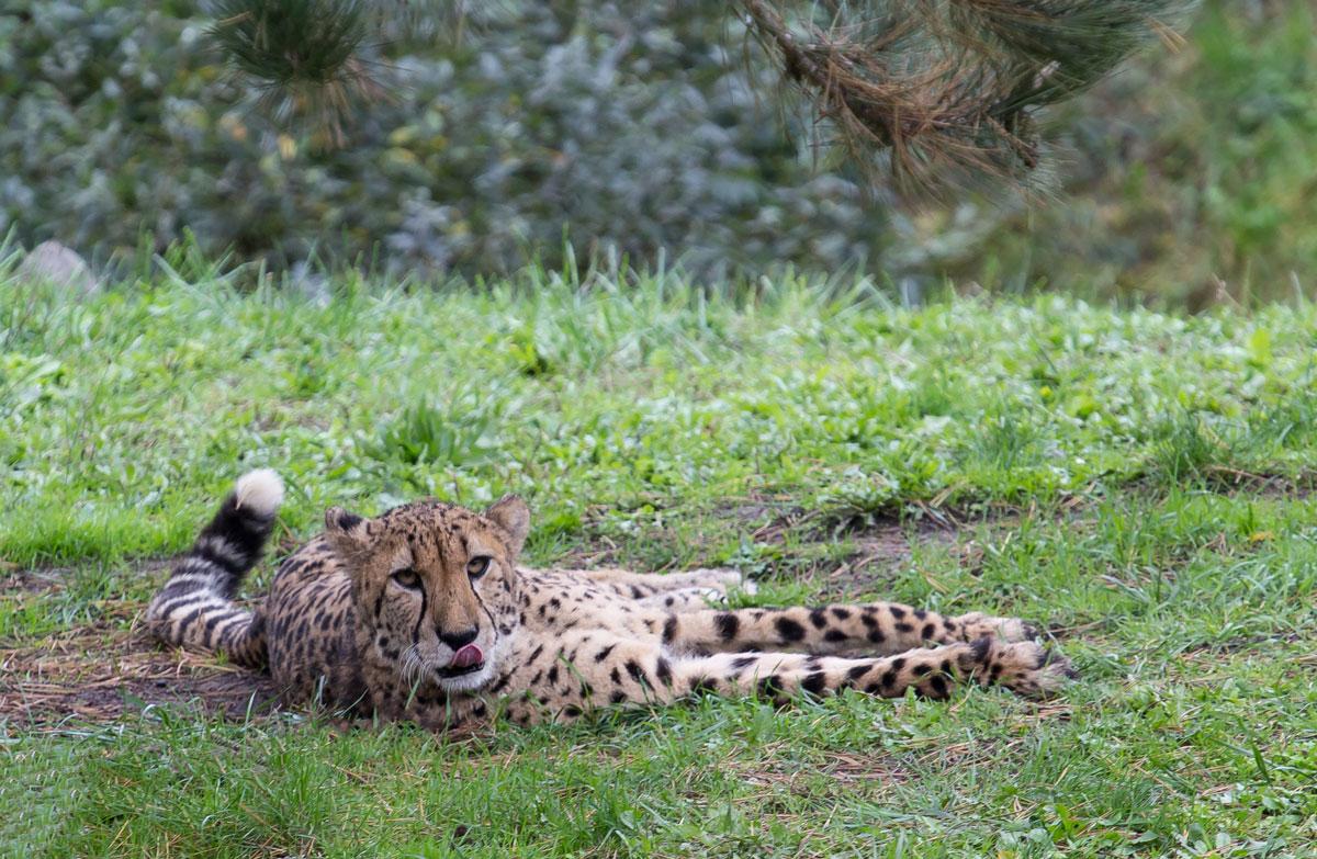 dierentuin Nederland