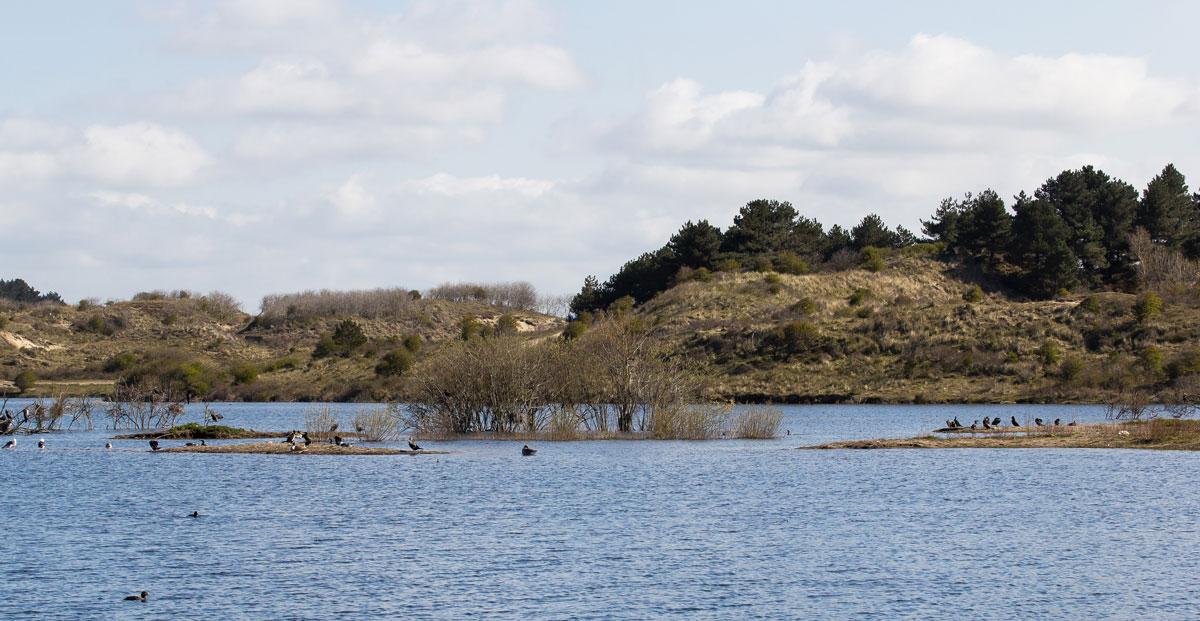 Vogelenmeer Kennemerduinen