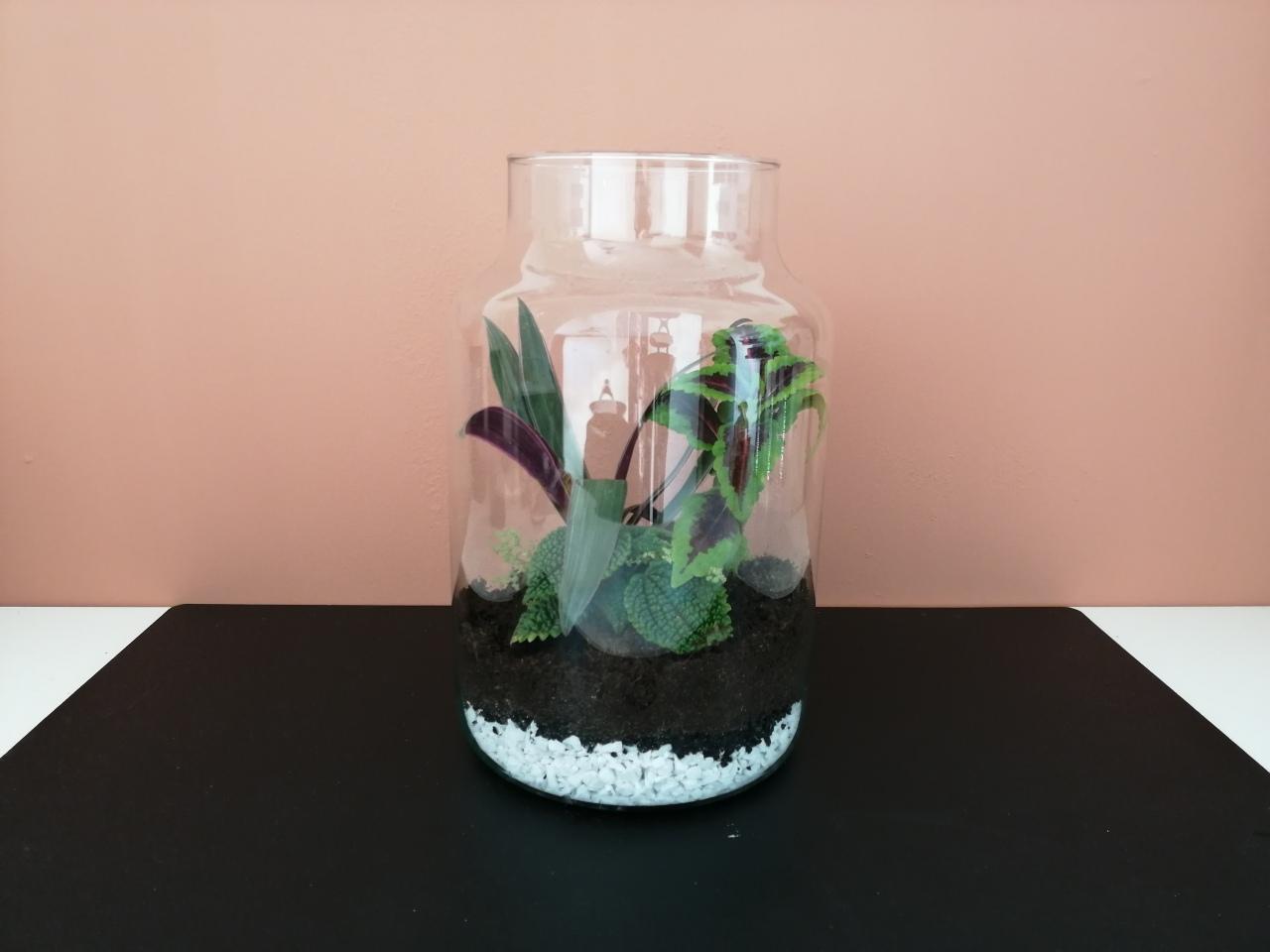 Maak je eigen planten terrarium