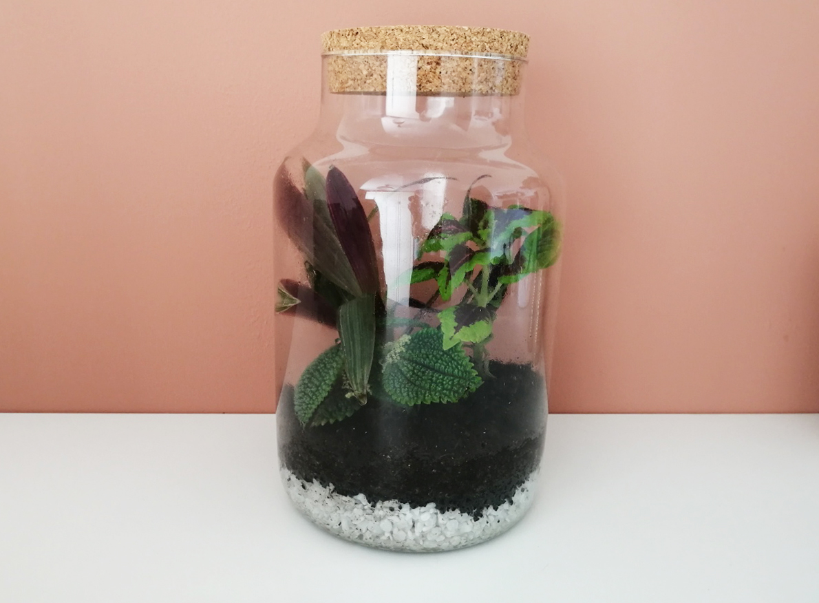 DIY Maak je eigen planten terrarium